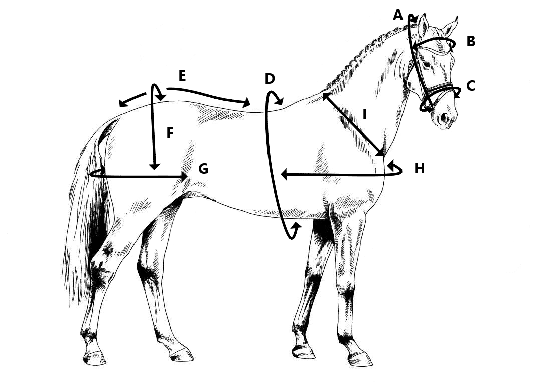 Maatschema Ideal Equestrian