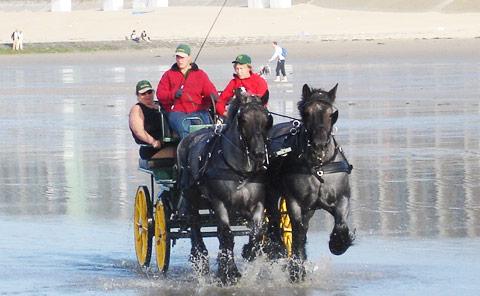 Ideal Trekpaarden belg tuig